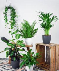 Verhuur Planten