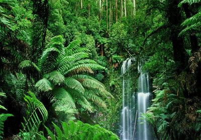 Jungle met Waterval Backdrop 300x200cm